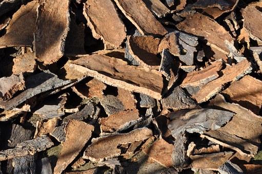cork-oak-505263__340